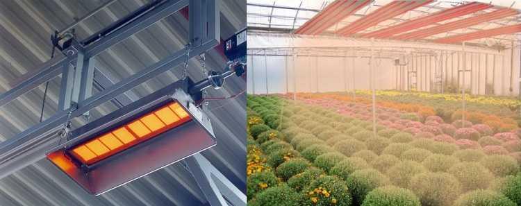 Отопление теплицы инфракрасными излучателями очень эффективно