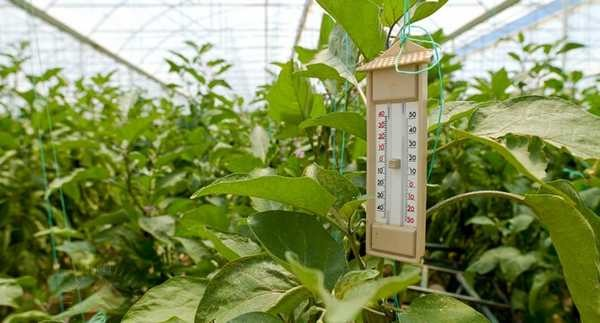 В теплице можно применять все стандартные решения для отопления