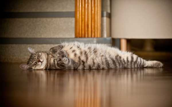 На теплом полу, вне зависимости от того, чем он заполнен, даже отдыхать приятно